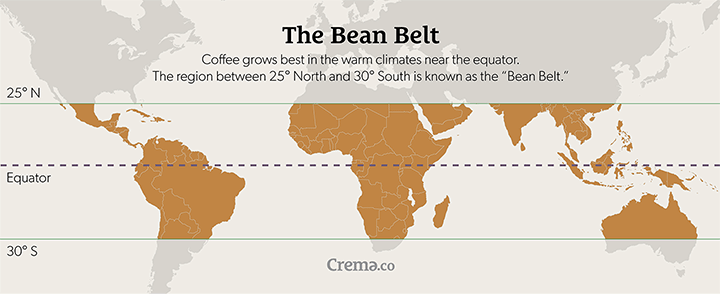 Coffee grows best in the warm climates near the equator from 25° North to 30° South, known as the bean belt.
